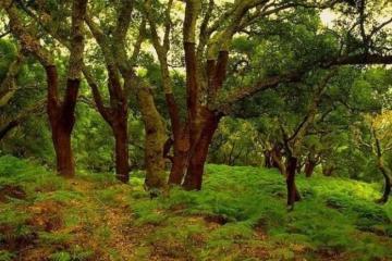 Los Alcornocales Natural Park